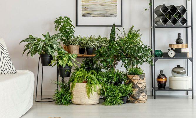 Vasos grandes para plantas