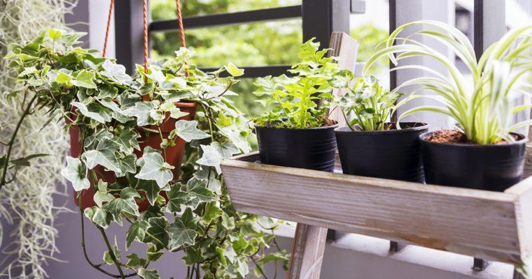plantas artificiais para area externa