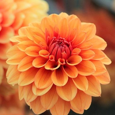 Dália buquê de flores artificiais para namorada