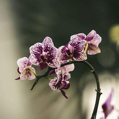 Orquídea buquê de flores artificiais para namorada