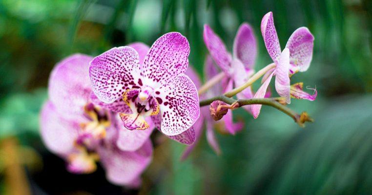 Vaso de orquidea artificial