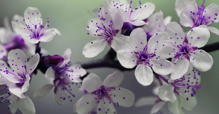 distribuidora-de-flores-artificiais-no-atacado