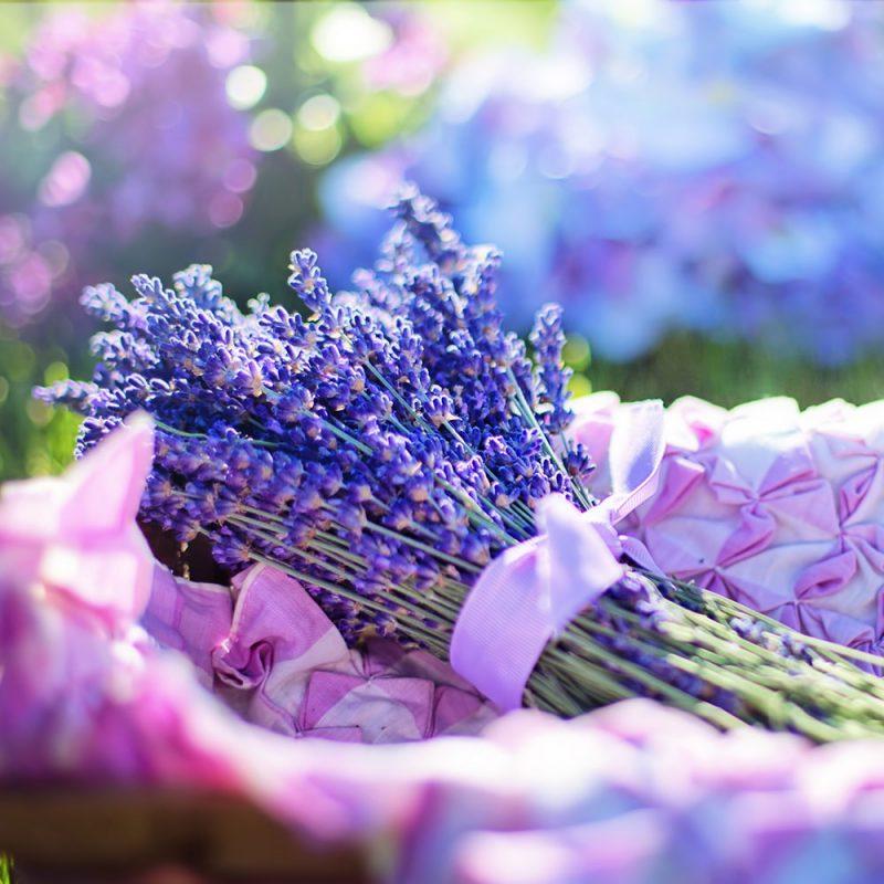 Flores Européias Lavanda