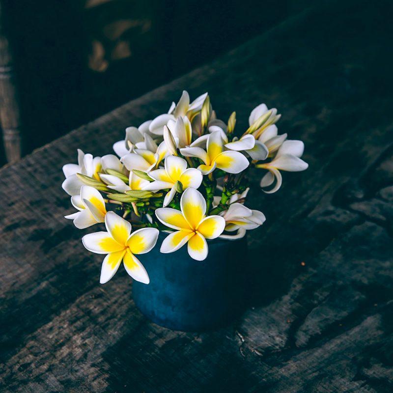 Flores Asiáticas Jasmim