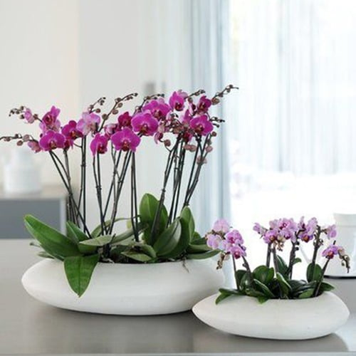 Arranjo de orquídeas artificiais com vaso branco