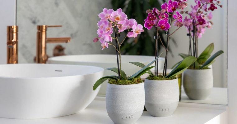 Vasos de orquídeas artificiais - Crysmax