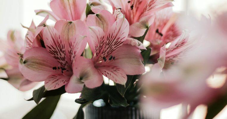 Plantas ornamentais artificiais - Crysmax