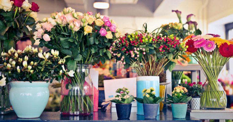 Significado das flores - Crysmax