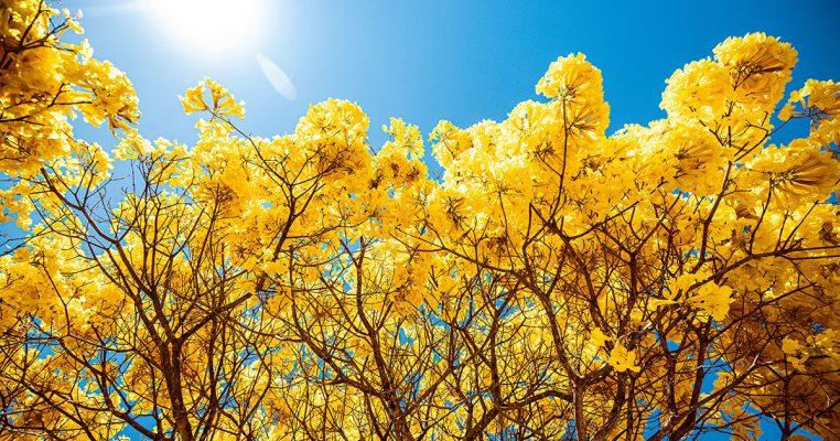 Flores brasileiras - Crysmax