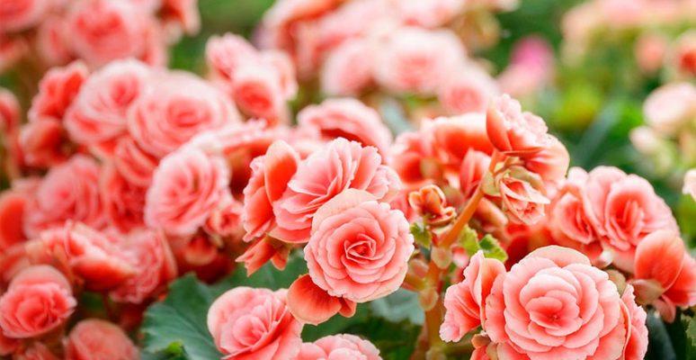 Flores que gostam de sol - Crysmax